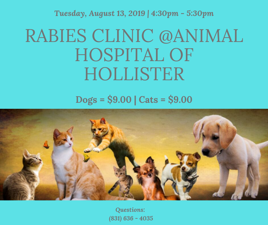 August 13 Rabies Clinic